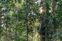 Bosque de la Propiedad - Forest of Property